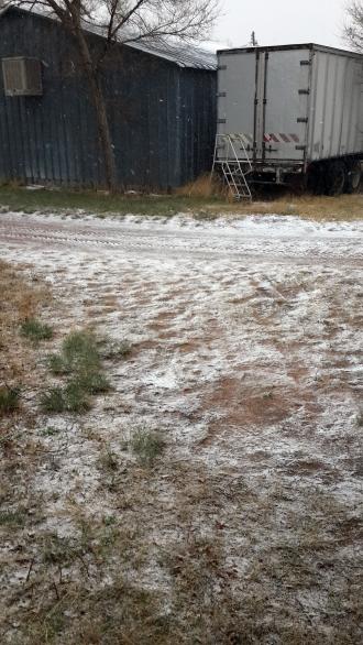 snow-web